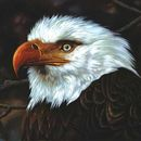 Pochette de The Hawk Is Howling
