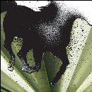 Pochette The Dark Horse