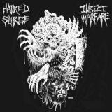 Split avec Hatred Surge